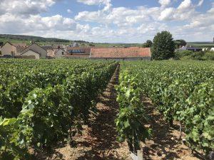 wijngaard champagne