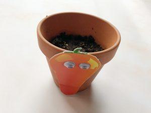 leukste moestuin makkelijk wortel zaaien