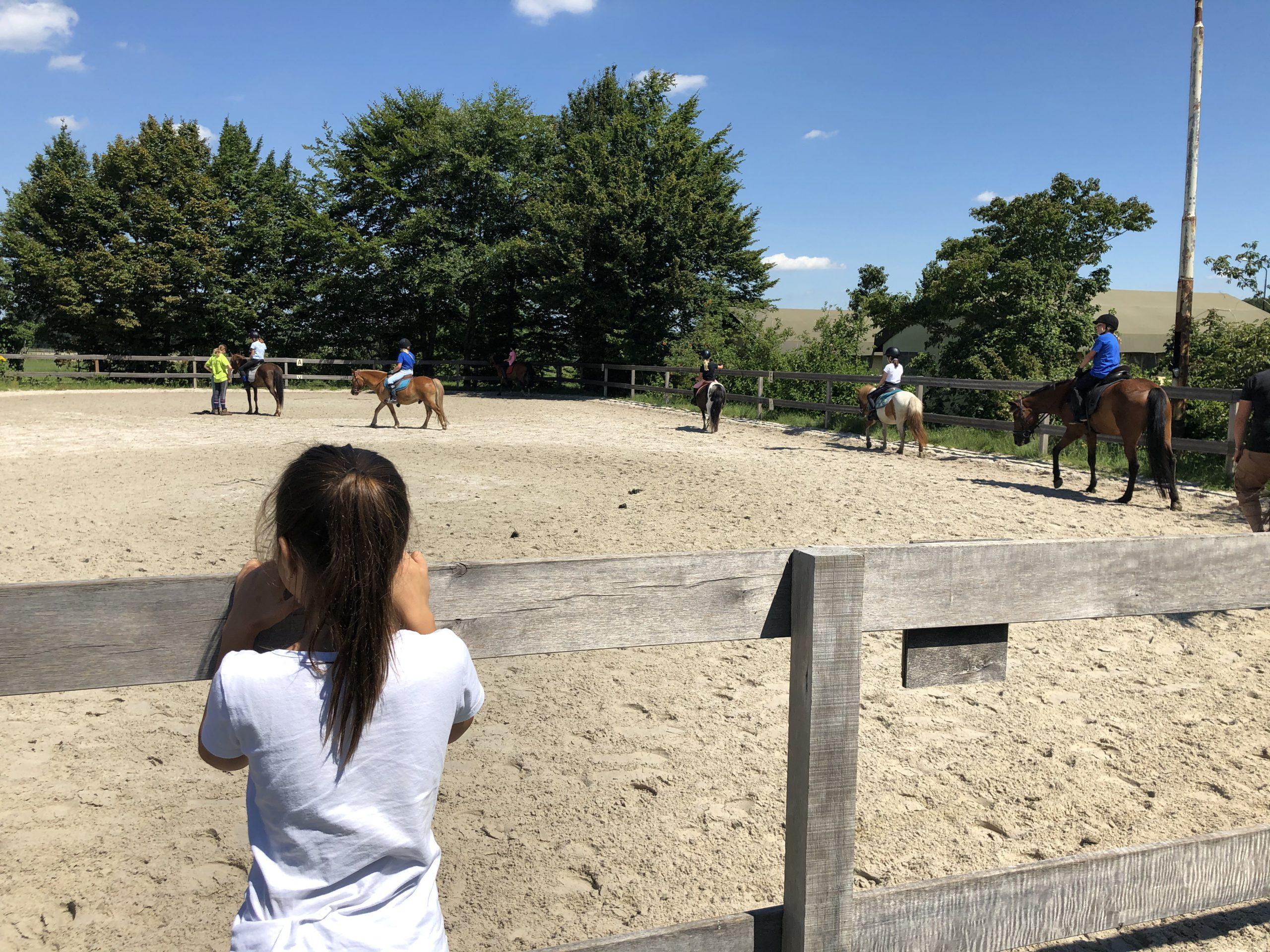 speelboerderij brabant - breehees paardem